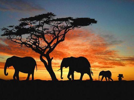 knuffelachterolifant