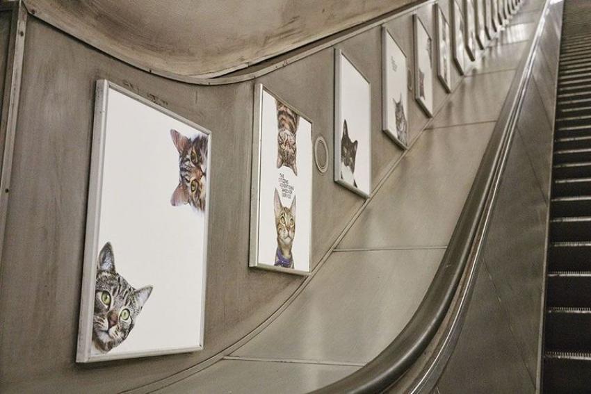 Des chats envahissent le métro