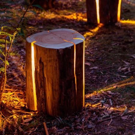 La lampe tronc