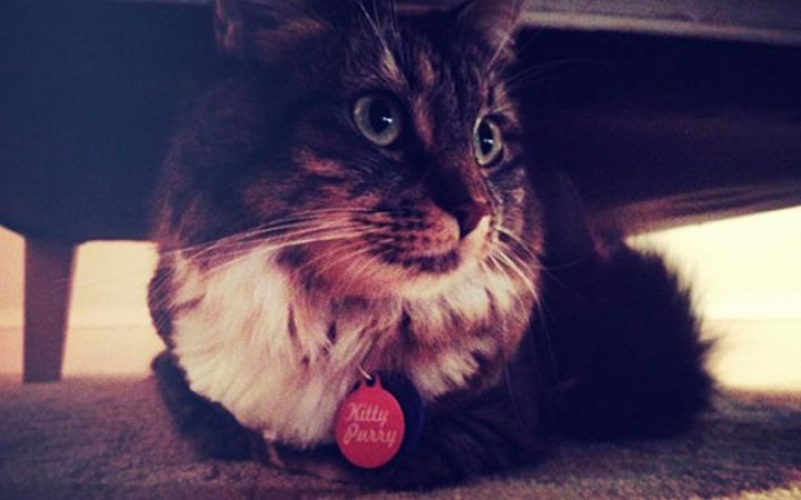 3. Katy Perry heeft een kat die Kitty Purry heet.