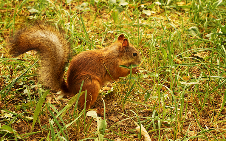 7. Er worden elk jaar honderden nieuwe bomen geplant omdat eekhoorns vergeten waar ze hun nootjes hadden begraven.