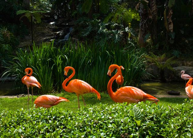 Une visite au Zoo d'Anvers