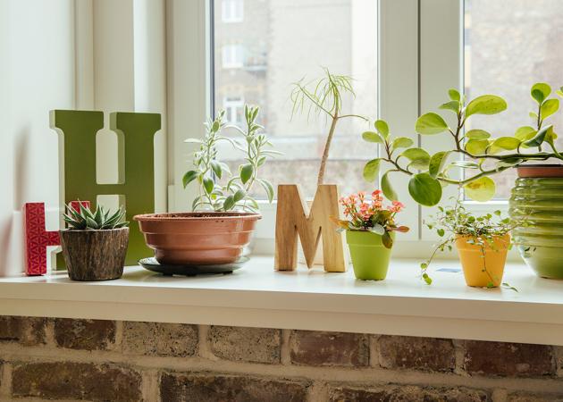 Des plantes chez Ikea ou Brico