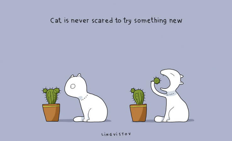 Le chat ne craint pas la nouveauté