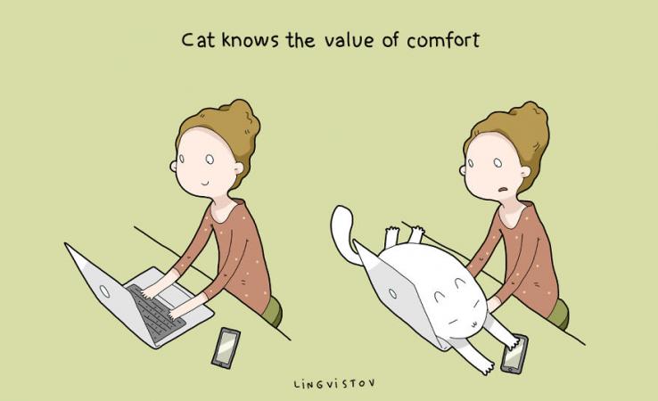 Le chat sait l'importance du confort
