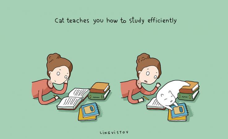 Le chat vous enseigne comment étudier efficacement