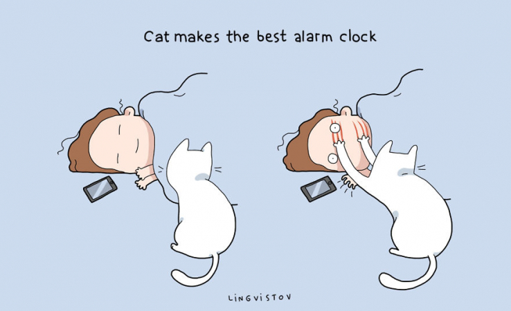 Le chat est le meilleur des réveils