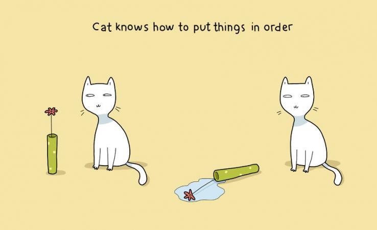 Le chat est un obsédé du rangement