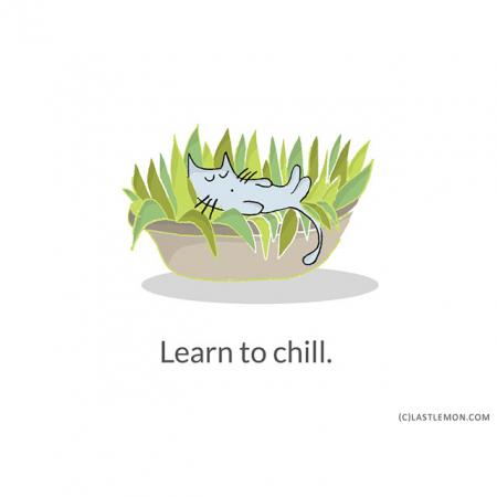 Levenslessen die je kat je kan leren