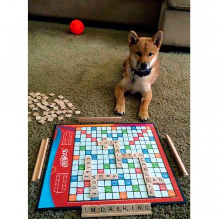 Spelen met de hond