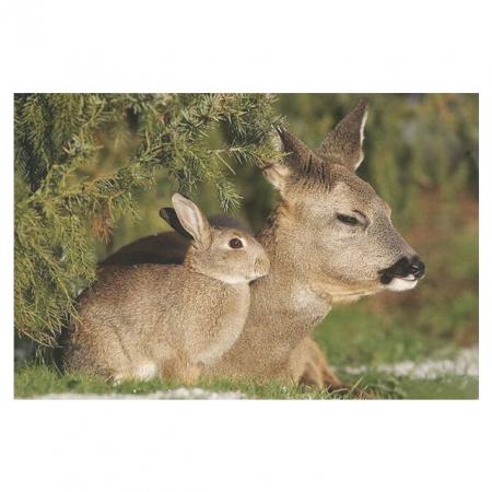 Deze dieren lijken als twee druppels water op elkaar