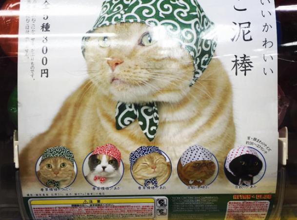 6. Des foulards pour chats