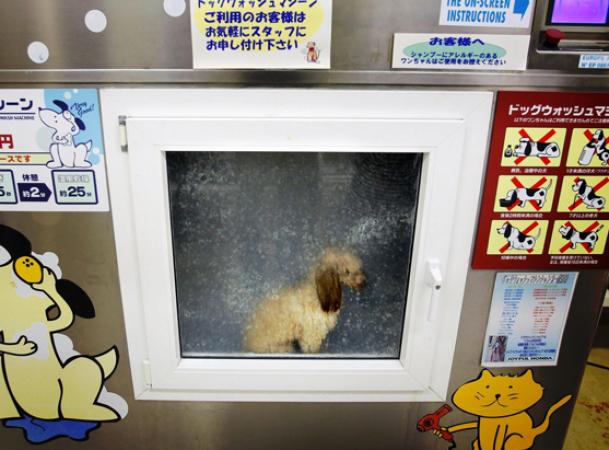 4. Des toilettages pour chien