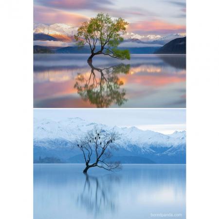 Wonderbaarlijke winterlandschappen