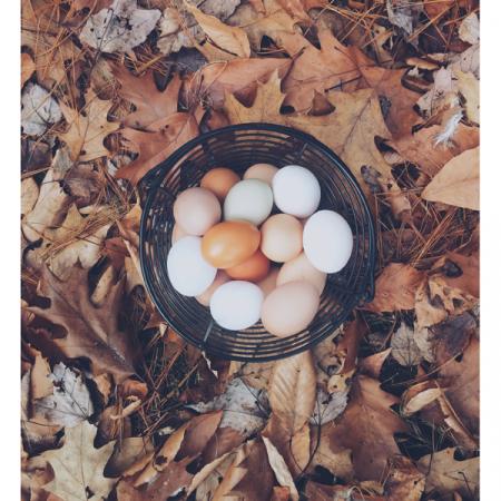 4. Eieren