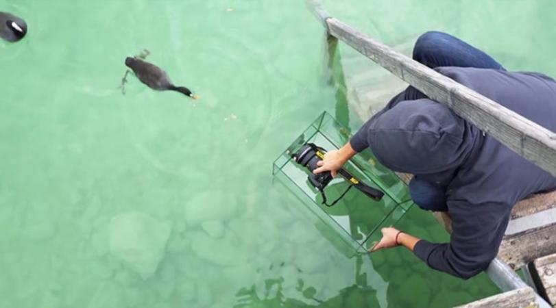 Dankzij een aquarium maak je mooie onderwaterfoto's.
