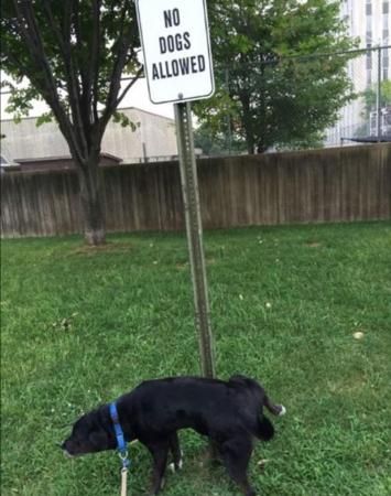 10. Geen honden toegelaten? Dat doen we hiermee!