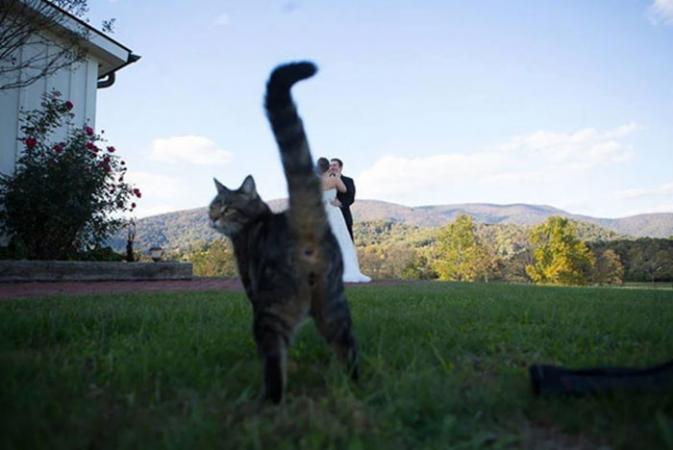 Niks mooier op je trouwfoto dan de anus van je kat.