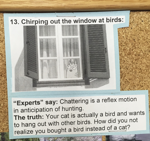 De waarheid achter het gedrag van je kat
