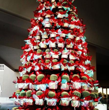 De boom die jaren meegaat<br /> @_nicki_mg