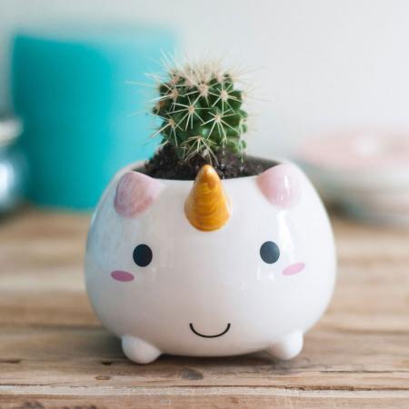 Pot de fleurs bébé licorne