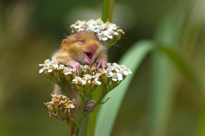© Andrea Zampatti/Comedy Wildlife Photo Awards