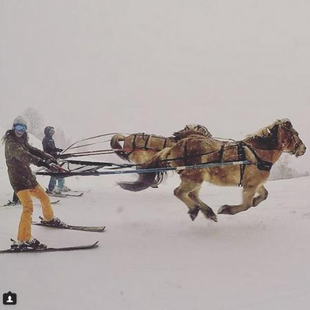 Le ski Joëring