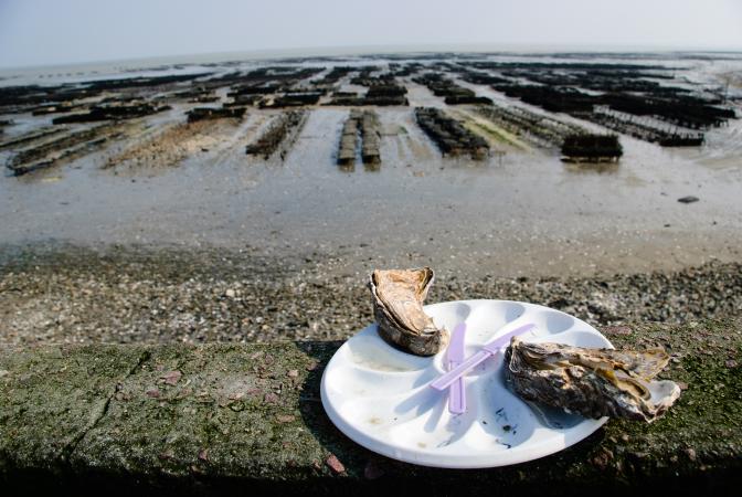 Déguster des huîtres au Port de Cancale