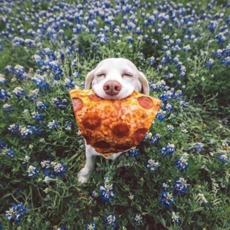 Sid Pizza Dog