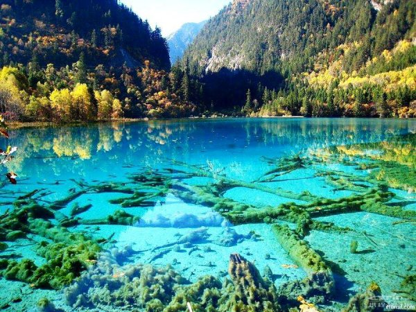 Five Flower Lake, Jiuzhaigou, Chine