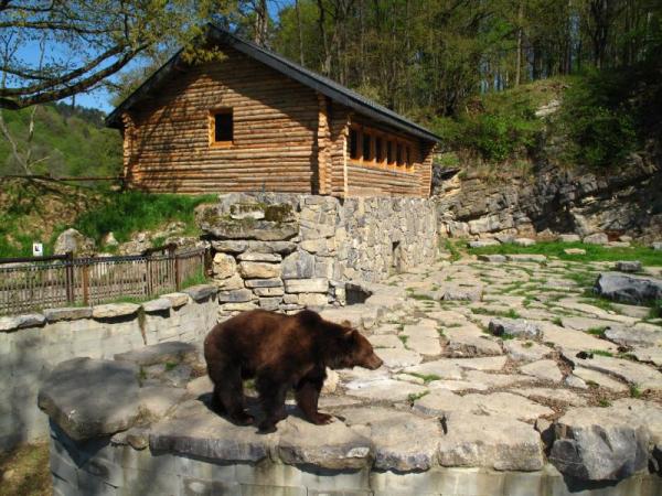 Dormir avec les ours au Domaine des Grottes de Han