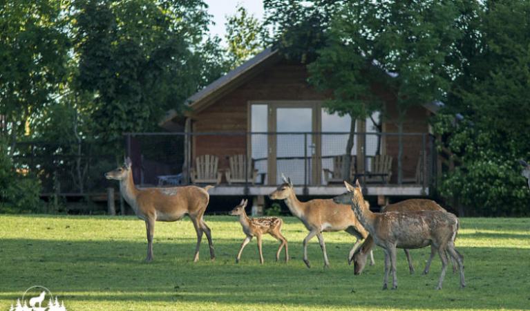 Dormir avec les cerfs au Parc animalier de Sainte-Croix