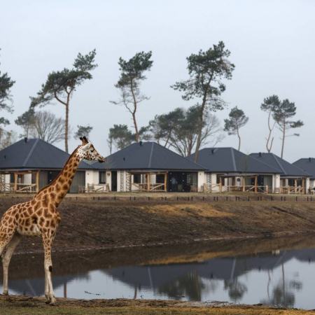 Dormir avec des animaux de la savane au Safari Resort Beekse Bergen