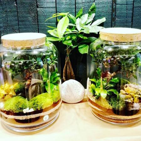 Un atelier terrarium
