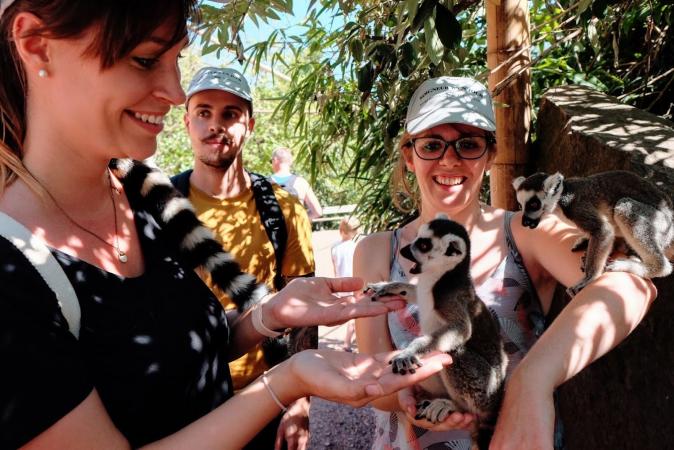 Les bébés lémuriens sont déjà bien à l'aise avec les visiteurs!