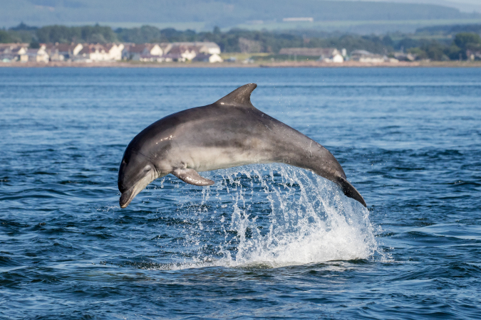 Dolfijnen bewonderen in Groot-Brittanië