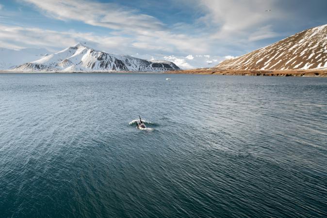 Walvissen fotograferen in IJsland