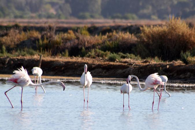 Vogels zoeken in Portugal