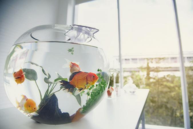 Maagd (24/08 – 23/09): een vis