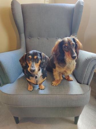Nel & Balou – 2,5 jaar & 1,5 jaar