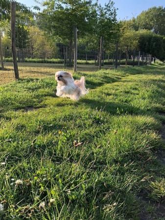 Phoebe – 3 jaar