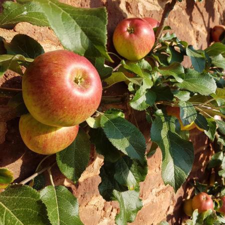 Pluk zelf je appels
