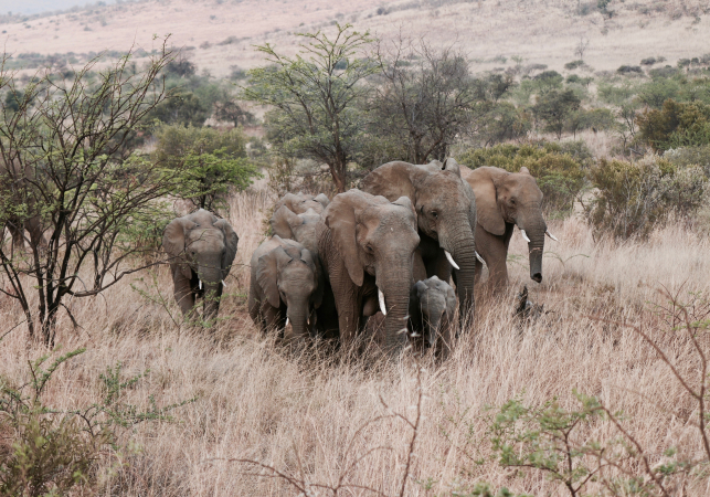 Big Five Marathon, Zuid-Afrika