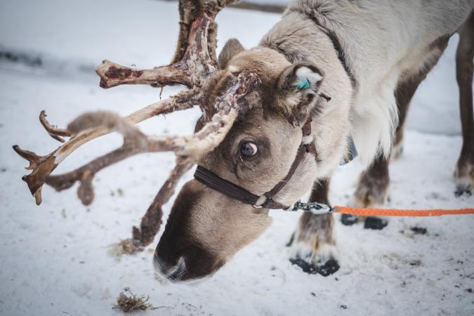 La Laponie, en Finlande