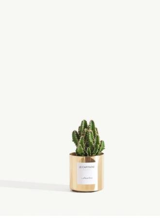 Une plante qui fait pousser le message