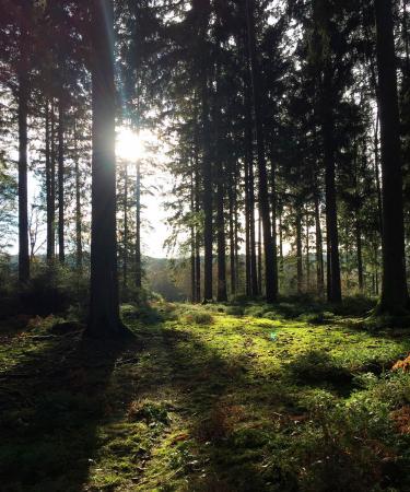 Goed voornemen: meer natuur in 2020!