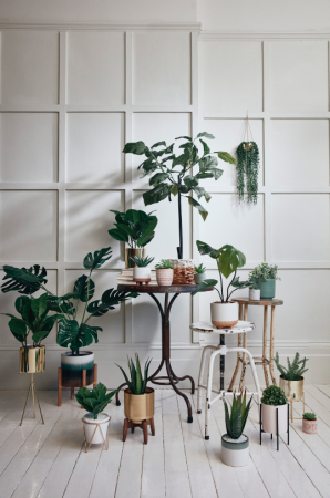 Primark Serene Green-collectie