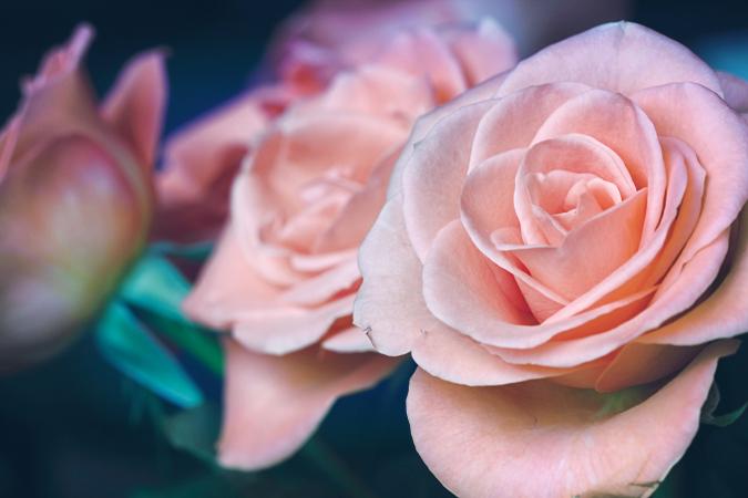 25 rozen