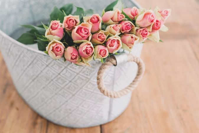 20 rozen