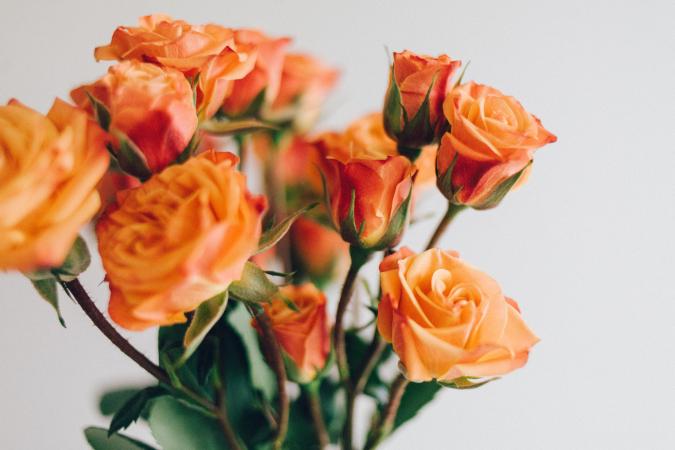 12 rozen